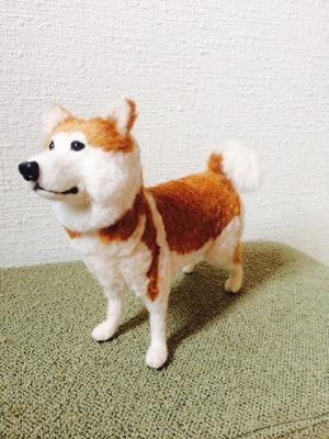 秋田犬りゅう3
