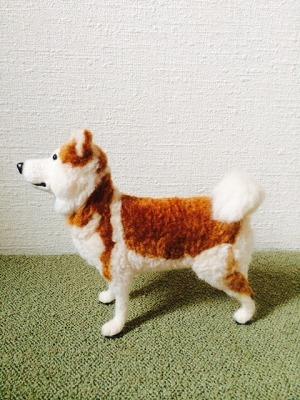 秋田犬りゅう4
