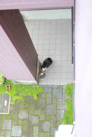 asyoku22.jpg