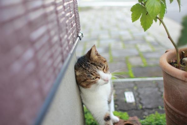 asyoku3.jpg