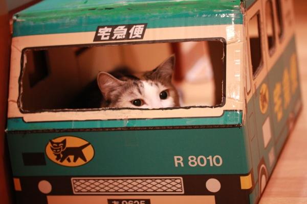 yorusifu1.jpg