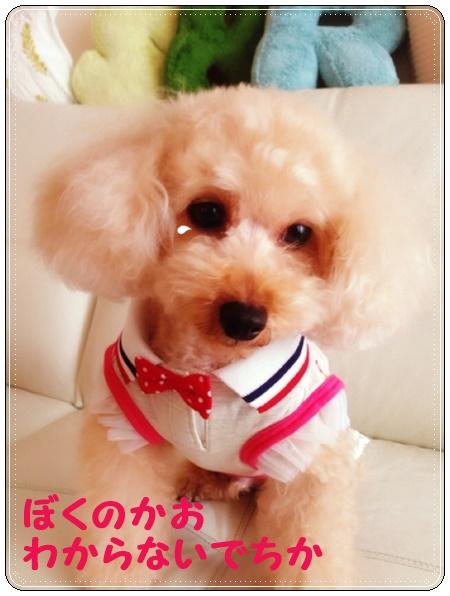 20150826 3ピンクがりくちゃん