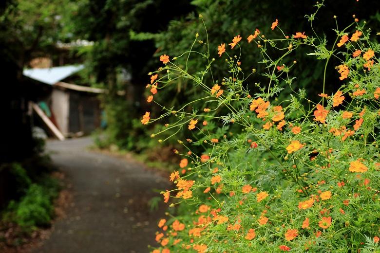 20150905寺谷ふるさと村3-1a