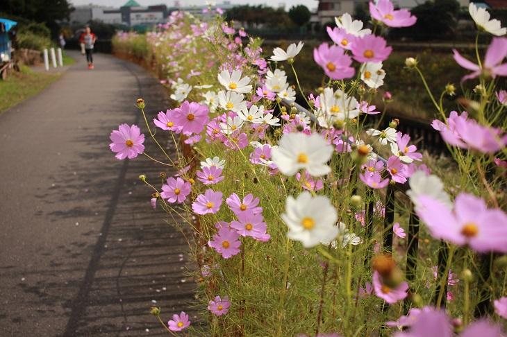 20151018早渕川a