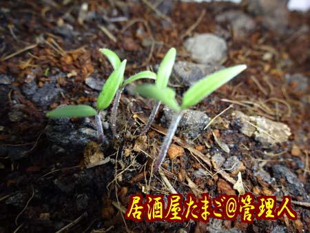20150831_3_S1.jpg