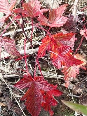 紅葉のはじまり1