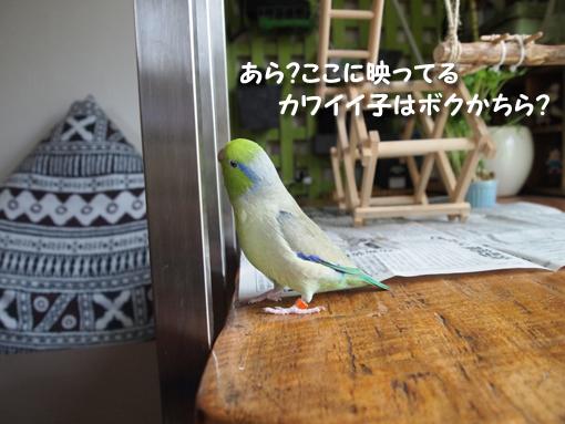 P7021315.jpg