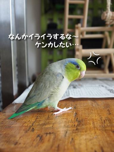 P7021326.jpg
