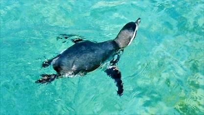 ペンギンさんです