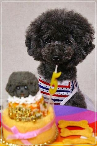 ケーキと一緒にナッたん5歳♪