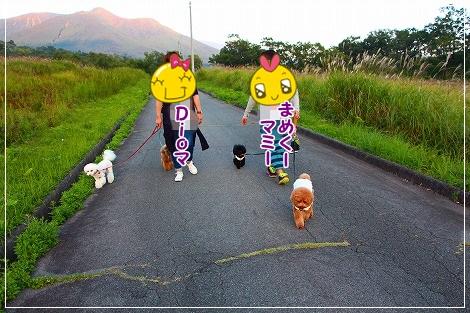 みんなでお散歩に行きまーす!