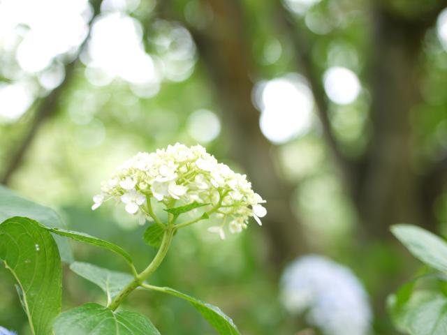 wasabinouen-09.jpg