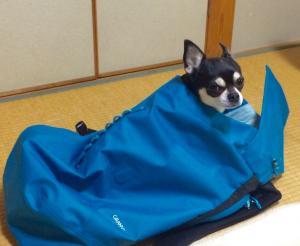 これは寝袋じゃない_convert_20151011195507