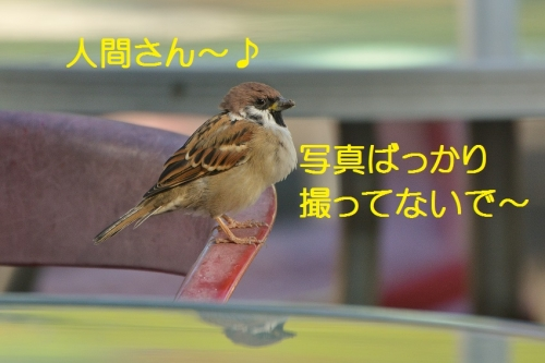 010_20151014183416e9c.jpg