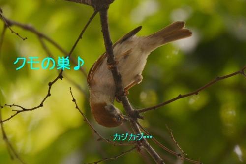 020_2015082320575733b.jpg