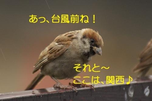 020_2015091318353481c.jpg