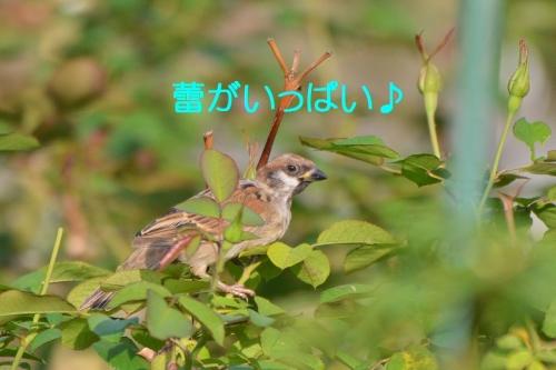 020_201510081914449e7.jpg