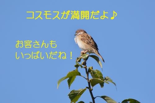020_201510191921055ac.jpg