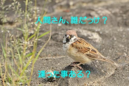 030_20151002204110fcf.jpg