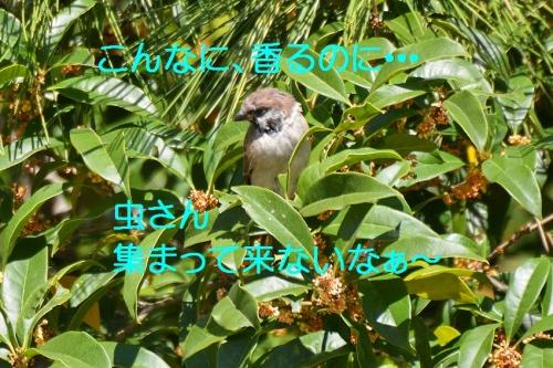 030_20151013204354e86.jpg
