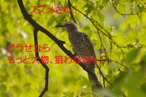 040_20150823205800bc9.jpg