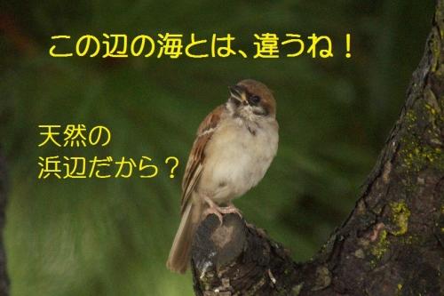 040_201509282117196d6.jpg