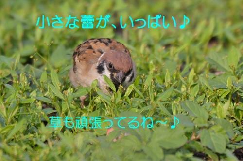 040_201510071851567d7.jpg
