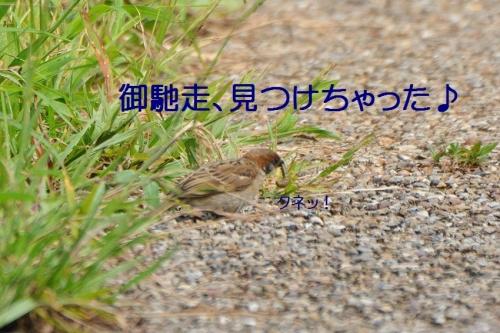 060_2015091022081406a.jpg