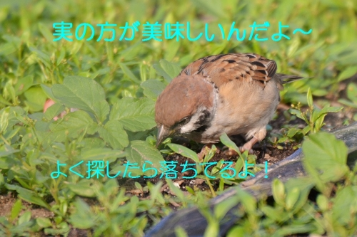 060_20151007185502aee.jpg
