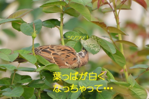 060_20151009183635e73.jpg