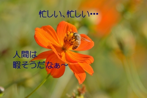 060_20151019192641bbe.jpg