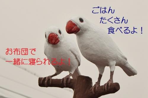 060_20151022173636973.jpg