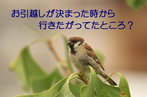 070_20150928211934fec.jpg