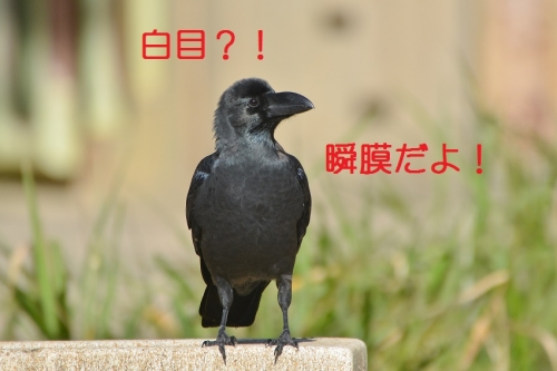 100_20151012193841e82.jpg