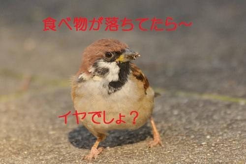 100_201510141835004c8.jpg