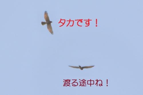 110_2015092821193817c.jpg