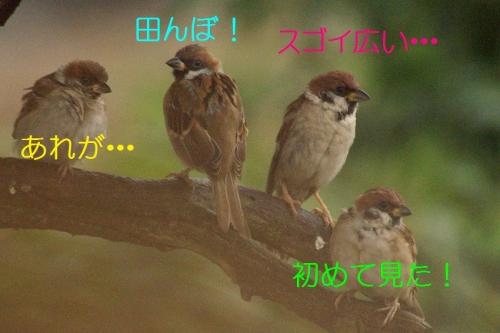 110_2015093017210667e.jpg