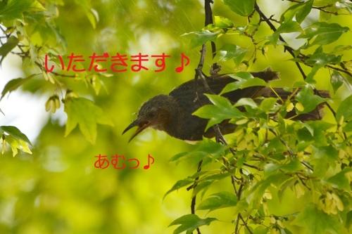120_20150823205940ba8.jpg