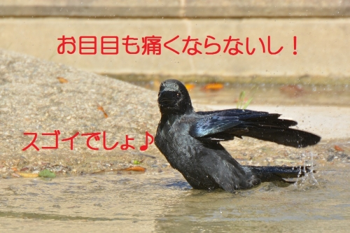 120_20151012194144fda.jpg