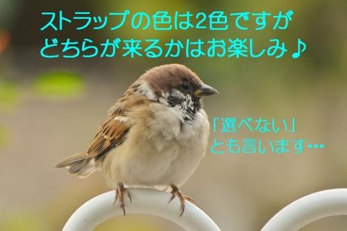 120_201510160400036e6.jpg