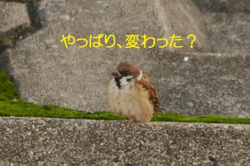 120_201510181948124ed.jpg