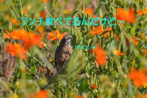 120_2015101919275198b.jpg