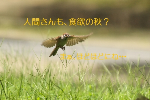 130_201509171850328ce.jpg