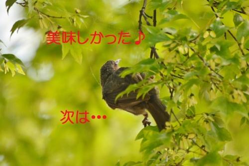 140_2015082320594357f.jpg