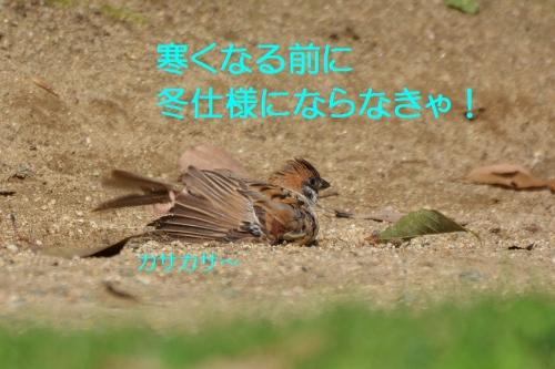 140_2015100518170341f.jpg