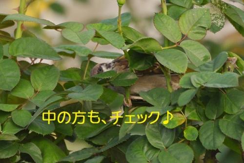 140_20151009183754fcf.jpg