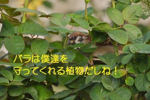 150_20151009183755d2e.jpg