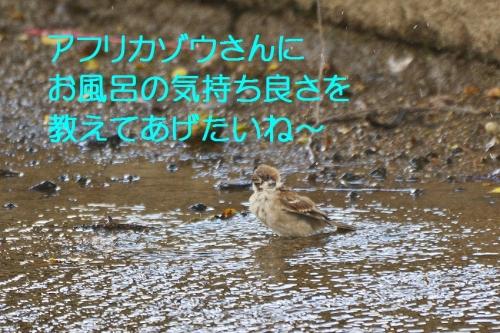 150_201510121941479f5.jpg