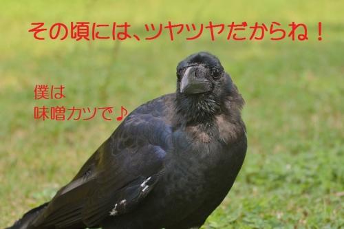 205_201510042200076e5.jpg