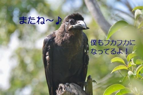 210_20151004220039bca.jpg